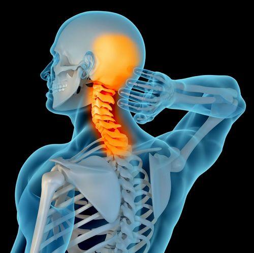 przekrój kręgosłupa szyjnego