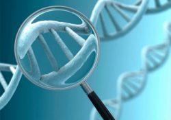 Badanie genów metabolizmu i otyłości cz.2