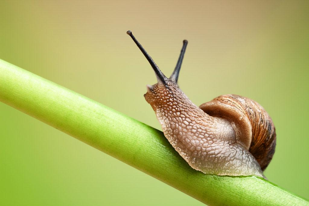 Śluz ślimaka – bogactwo składników dla skóry