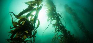 Algi morskie oczyszczają i regenerują skórę