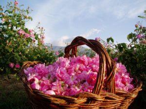 Woda różana oczyszcza i łagodzi